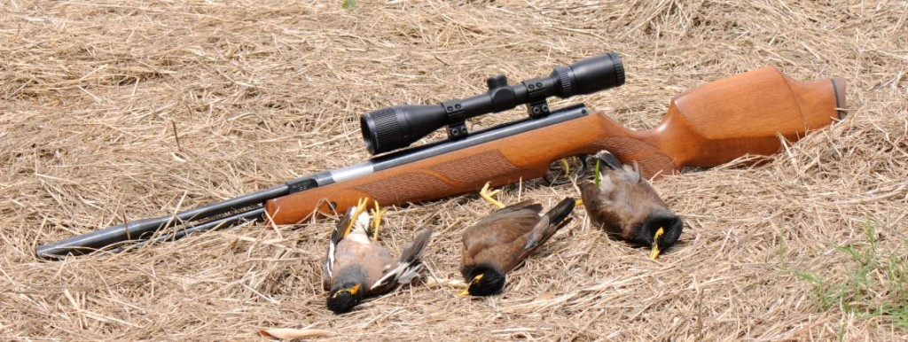 best air rifle bird hunting